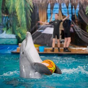 Дельфинарии, океанариумы Вереи
