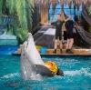 Дельфинарии, океанариумы в Верее