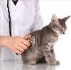 Ветеринарные клиники в Верее